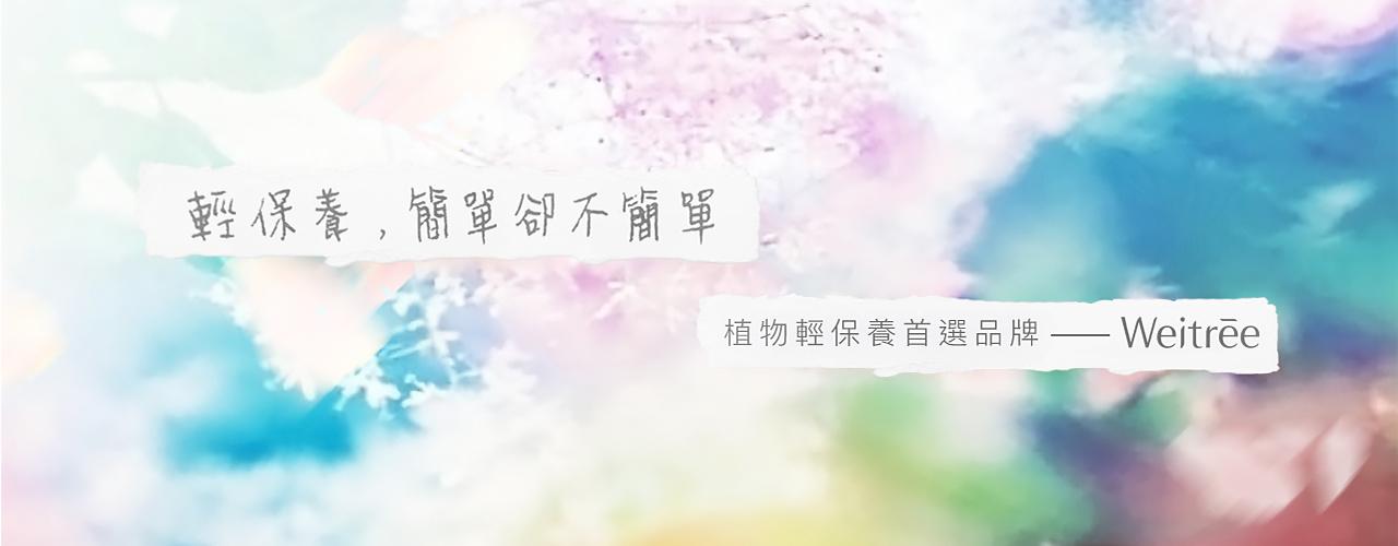 「Weitree」的圖片搜尋結果