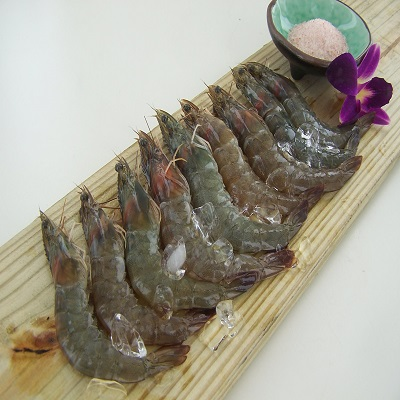 【冷凍店取-新港漁會】東海岸活凍白蝦(300g/14-16隻)