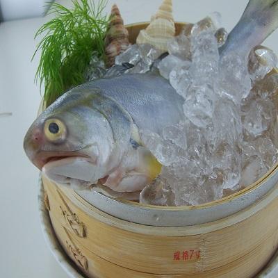 【冷凍店取-新港漁會】午仔魚300-400g