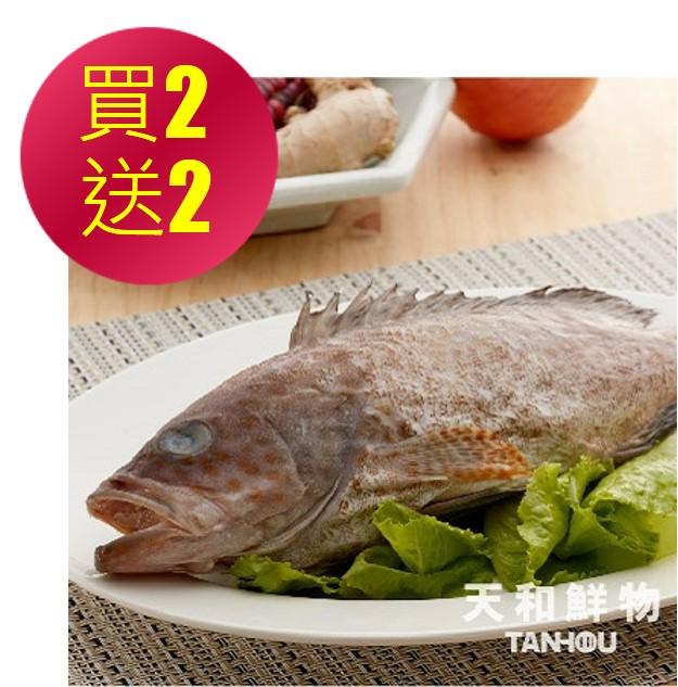 【冷凍店取-天和鮮物】手釣野生豹紋石斑(買二送二)