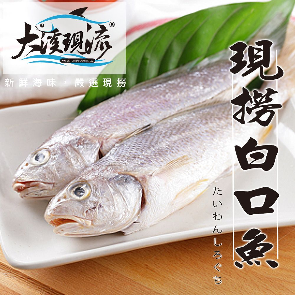 野生现捞 白口鱼 / 白姑鱼 / 春子 / 帕头 ( 小尾 150g±10% _ 一公斤 ) 【大溪现流】