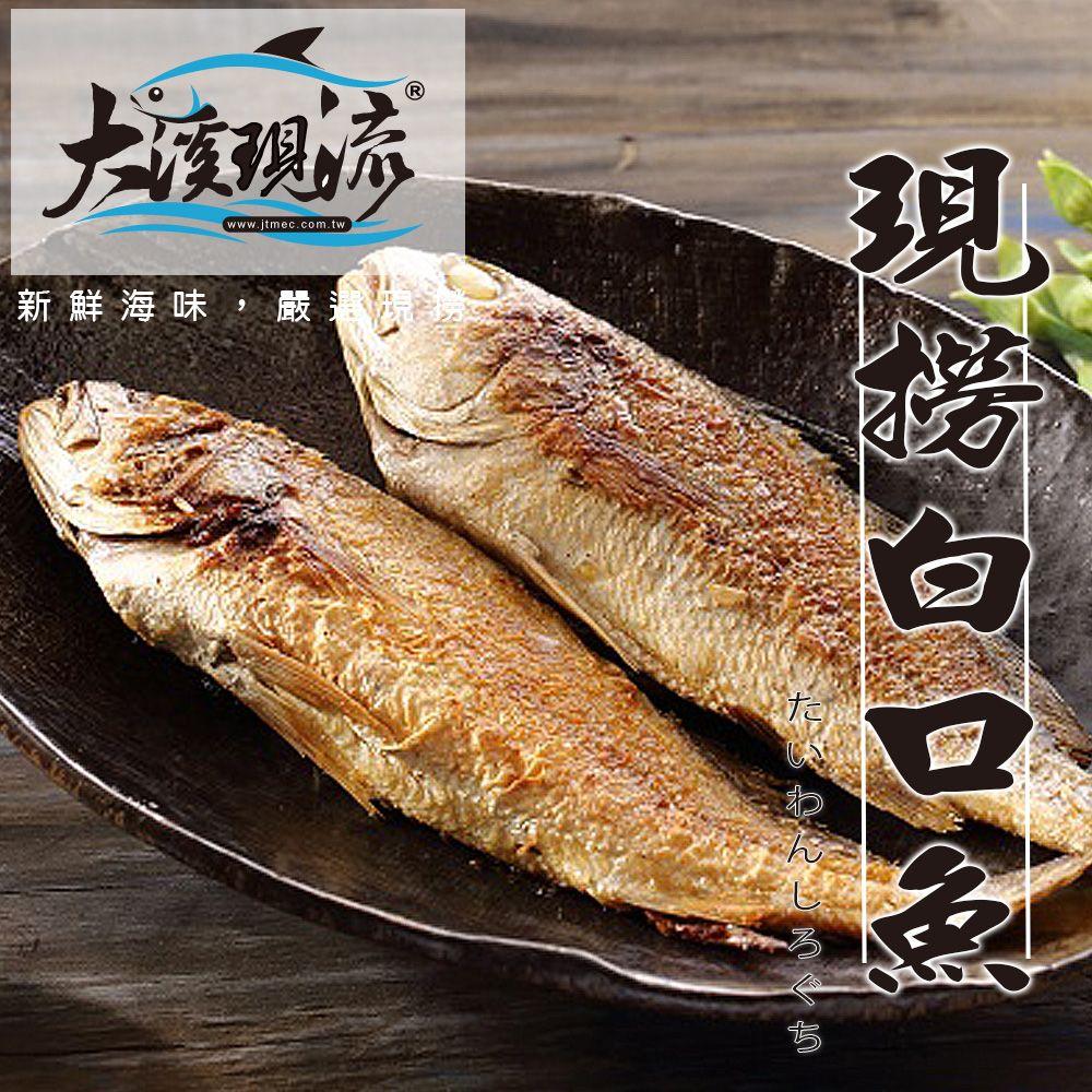 野生现捞 白口鱼 / 白姑鱼 / 春子 / 帕头 ( 中尾 250g±10% _ 尾 ) 【大溪现流】