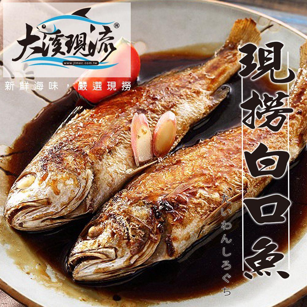 野生现捞 白口鱼 / 白姑鱼 / 春子 / 帕头 ( 中尾 250g±10% _ 一公斤 ) 【大溪现流】